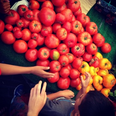 Picking up Tomatoes from Alm Hill