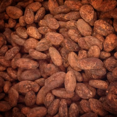 Peruvian cacao beans from Indi